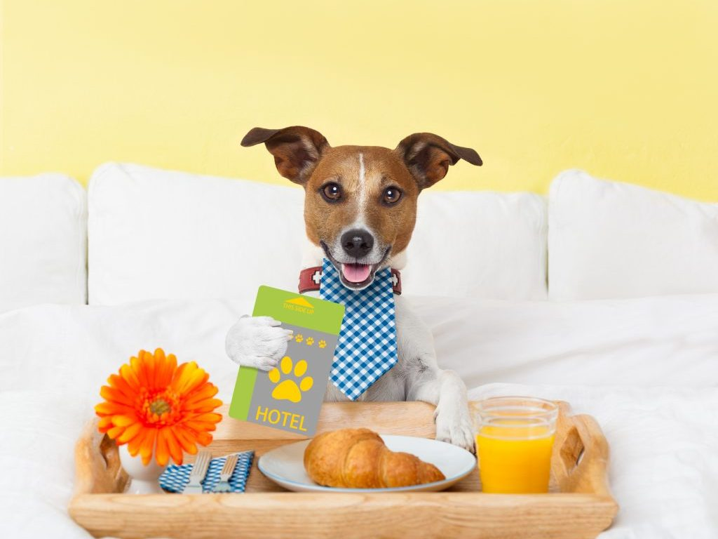 Why A Hotel For Dogs Is A Useful Service